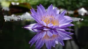 Exotische Blume als Sinnbild dafür, um exotisch in ETFs zu investieren