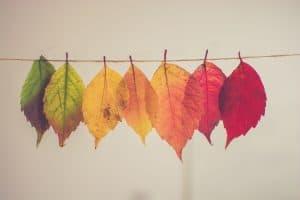 Verschieden-farbige Blätter an einem Seil aufgehängt
